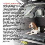 Stickers-Trasporto-Animali-Vivi-Descrizione-A